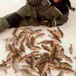 Совет по засолке рыбы