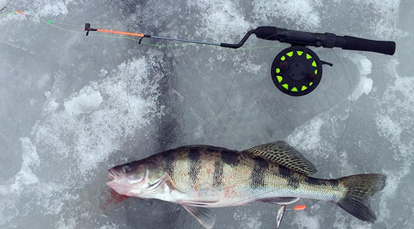 Зимняя ловля судака в глубоких местах