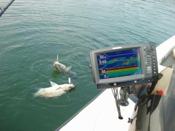 Успешная рыбалка с эхолотом