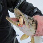Выбор блесны на щуку для зимней рыбалки