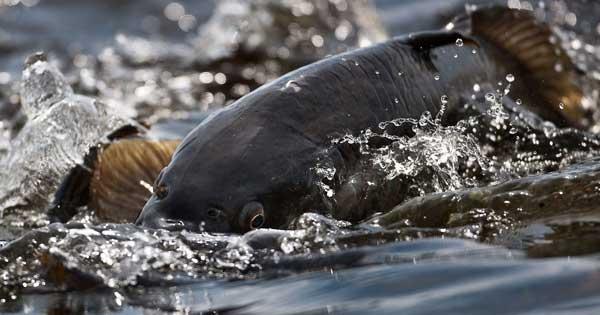 Удачная рыбалка на самодельную макуху