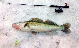 Как выбрать леску для зимней рыбалки