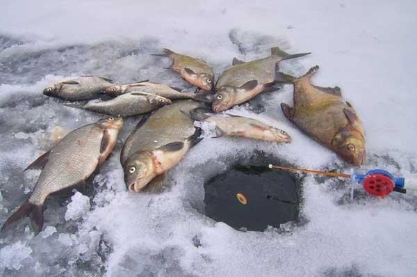 Все о выборе лески для подледной рыбалки