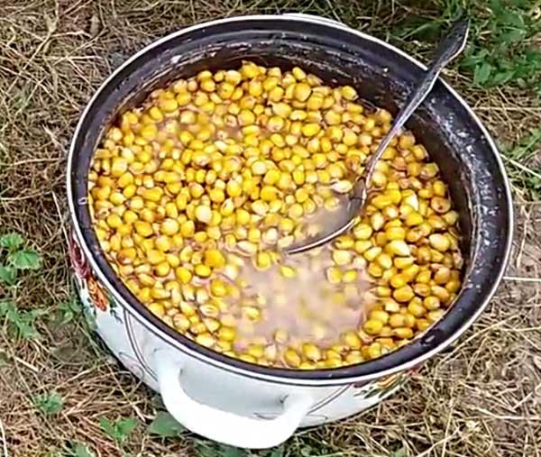 Варенная кукуруза для ловли карпа
