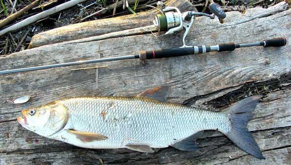 Критерии выбора спиннинга для рыбалки с берега