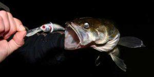 Ночная ловля судака со льда