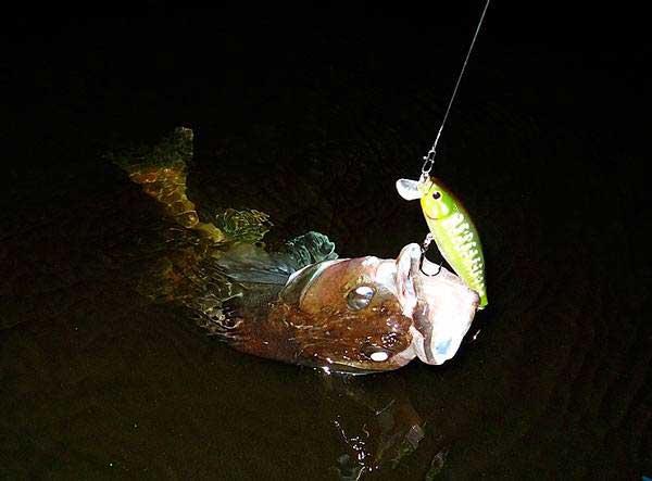 Ловля судака в марте ночью